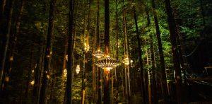 Redwoods Tree Walk at Night